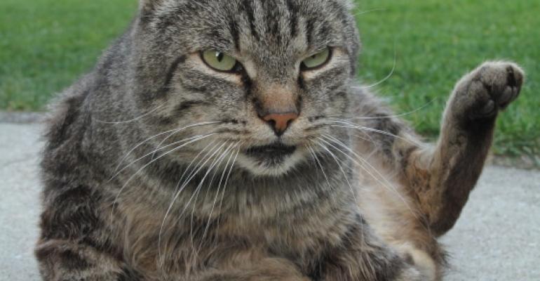 Kočky - kdo tady koho vlastně ochočil?